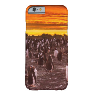 Penguin colony at sunset, Falkland Barely There iPhone 6 Case