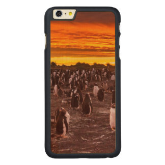 Penguin colony at sunset, Falkland Carved® Maple iPhone 6 Plus Case