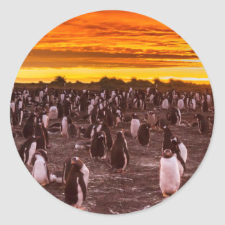 Penguin colony at sunset, Falkland Classic Round Sticker