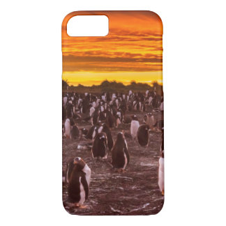 Penguin colony at sunset, Falkland iPhone 8/7 Case