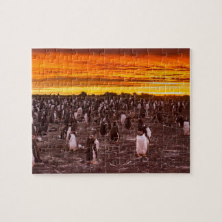 Penguin colony at sunset, Falkland Jigsaw Puzzle