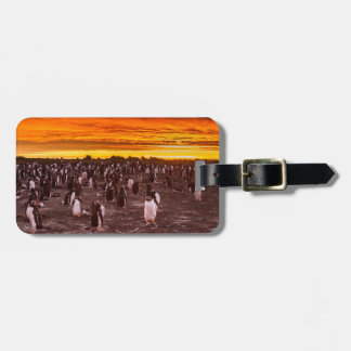 Penguin colony at sunset, Falkland Luggage Tag