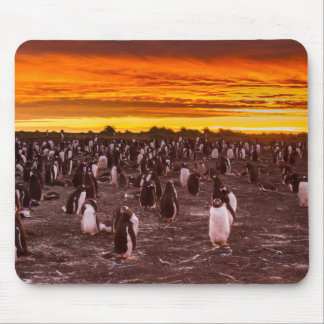 Penguin colony at sunset, Falkland Mouse Pad