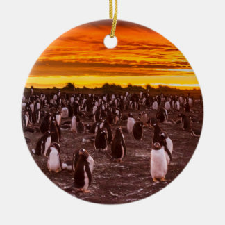 Penguin colony at sunset, Falkland Round Ceramic Ornament