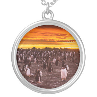 Penguin colony at sunset, Falkland Silver Plated Necklace