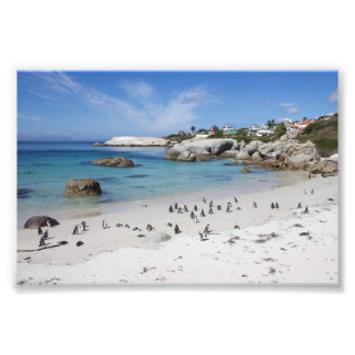 Penguin Colony on Boulders Beach, South Africa Photo Print