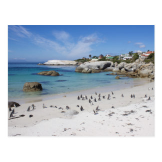 Penguin Colony on Boulders Beach, South Africa, Postcard