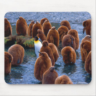 Penguin Day Care Mouse Pad