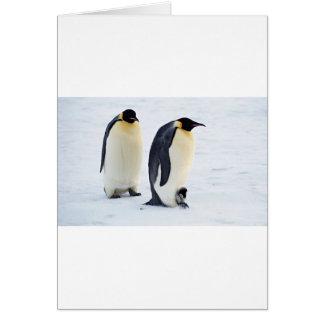 Penguin frozen ice snow bird weather cute animals card