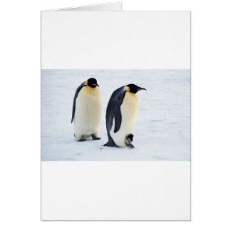 Penguin frozen ice snow bird weather cute animals greeting card