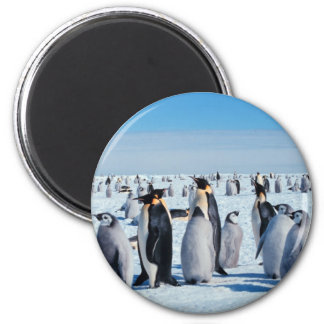 Penguin Gathering 2 Inch Round Magnet