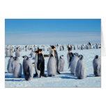 Penguin Gathering Cards