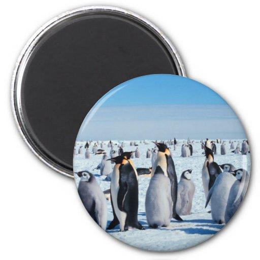 Penguin Gathering Refrigerator Magnet