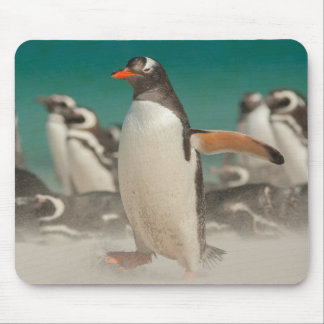 Penguin group on beach, Falklands Mouse Pad