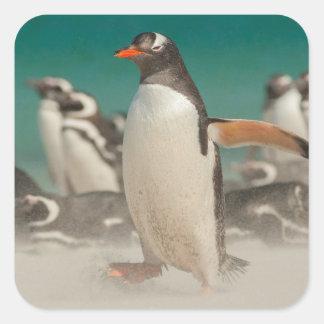 Penguin group on beach, Falklands Square Sticker