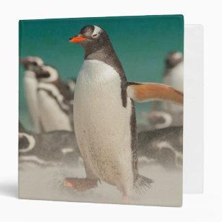 Penguin group on beach, Falklands Vinyl Binder