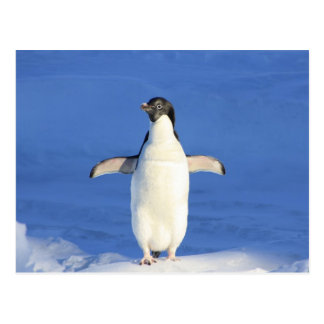 penguin happy dance hug postcard