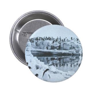 Penguin Herd 2 Inch Round Button