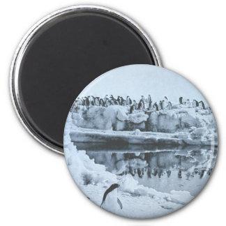 Penguin Herd 2 Inch Round Magnet