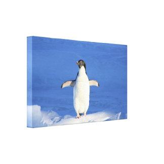 Penguin on ice canvas print
