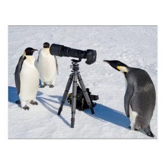 Penguin Paparazzi Postcard