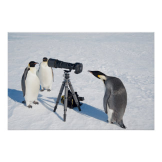 Penguin Paparazzi poster