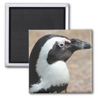 Penguin Profile Square Magnet