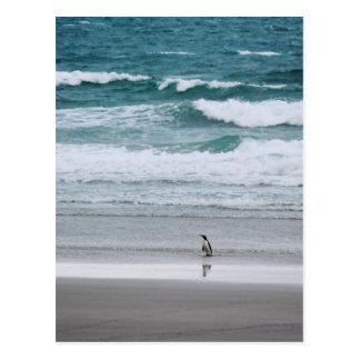 Penguin returning from the ocean postcard