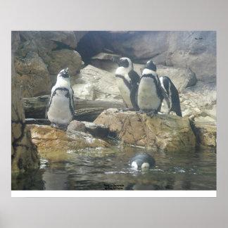 Penguin Serenade Poster