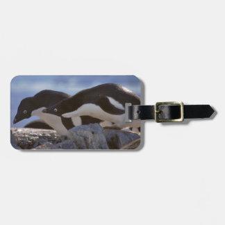 Penguin-tastic Luggage Tag