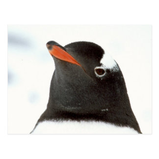 Penguin-tastic Postcard