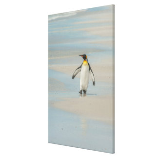 Penguin walking on the beach canvas print