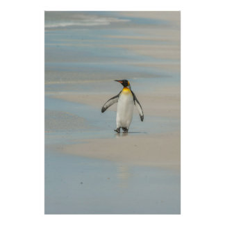 Penguin walking on the beach poster