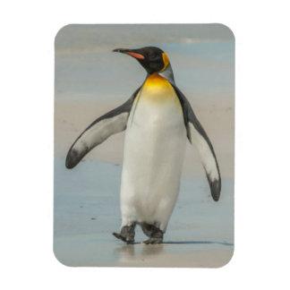 Penguin walking on the beach rectangular photo magnet