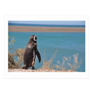 Penguin wants to go postcard