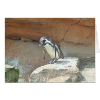 Penguin, Wildlife, Animal, Wild Bird, Zoo, Summer Card