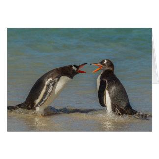 Penguins arguing, Falkland Islands Card