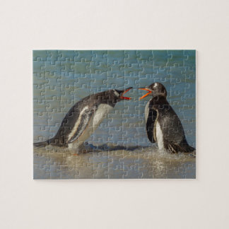 Penguins arguing, Falkland Islands Jigsaw Puzzle