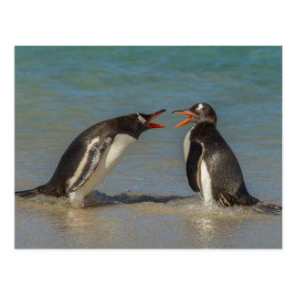 Penguins arguing, Falkland Islands Postcard