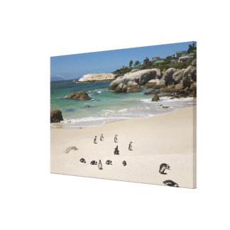 Penguins at Boulders Beach, Simons Town, South Canvas Print