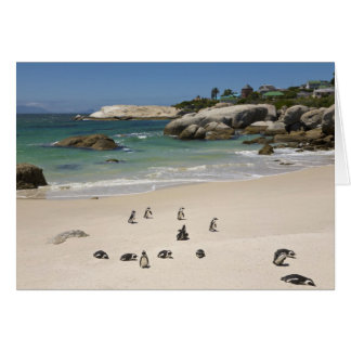 Penguins at Boulders Beach, Simons Town, South Card