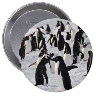 Penguins at Play 4 Inch Round Button