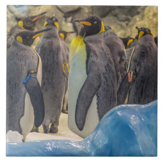 Penguins at the zoo ceramic tile
