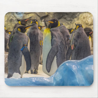 Penguins at the zoo mousepad
