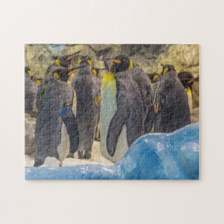 Penguins at the zoo photo puzzle