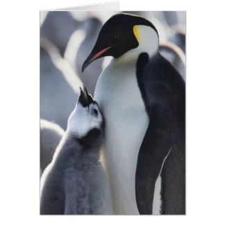 Penguins! Card