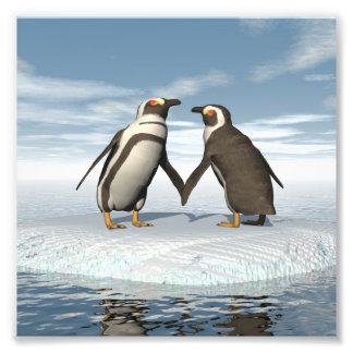 Penguins couple photographic print