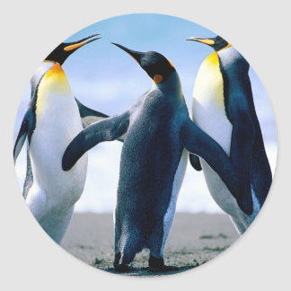 Penguins from Alaska Classic Round Sticker