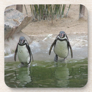 Penguins Go For A Swim Coaster