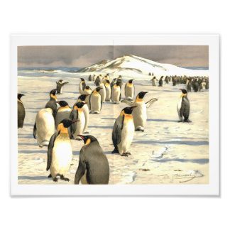 Penguins in Antarctica illustration Photograph